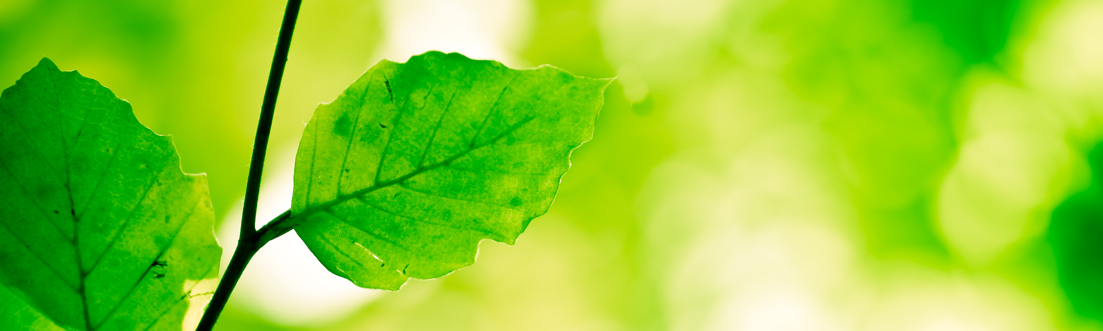 Find LEED Green Building Products Easily